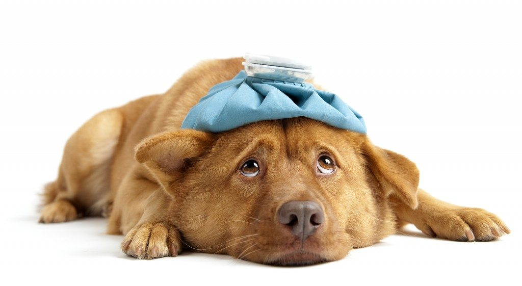 Sick Days for Dogs