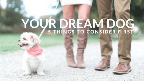 5 Things to Know Before Bringing Home a Dog
