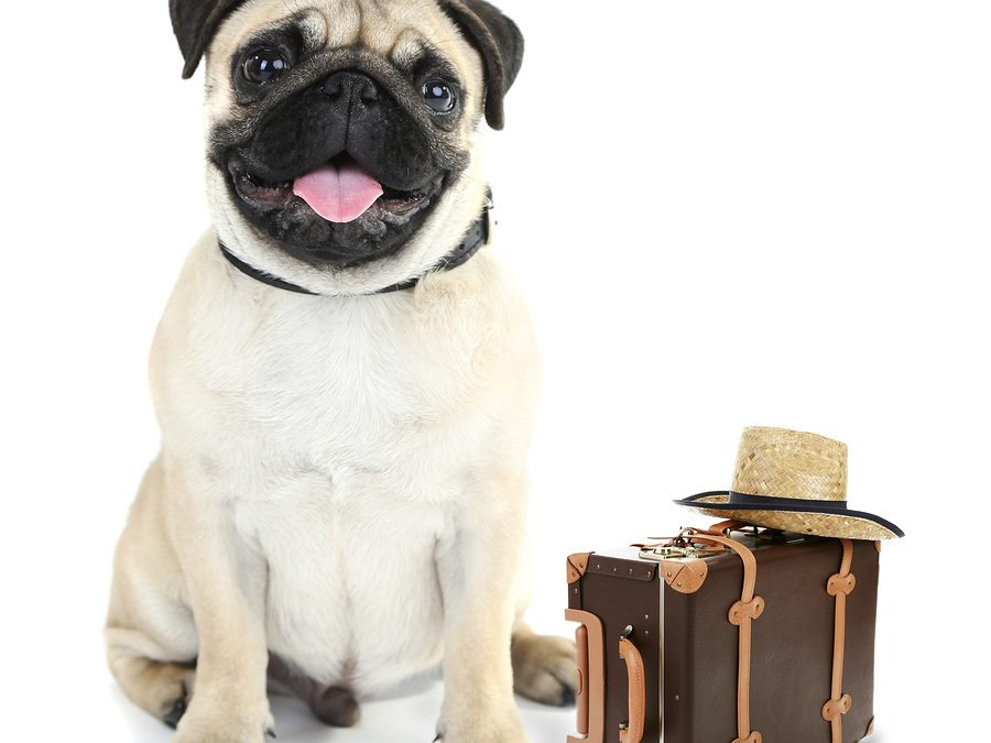 How to Be Prepared When Boarding Your Dog