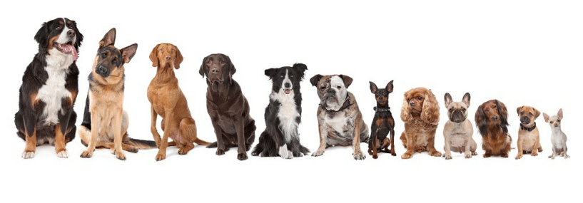 4 Reasons Why Wag 'N' Tails is called a School for Dogs
