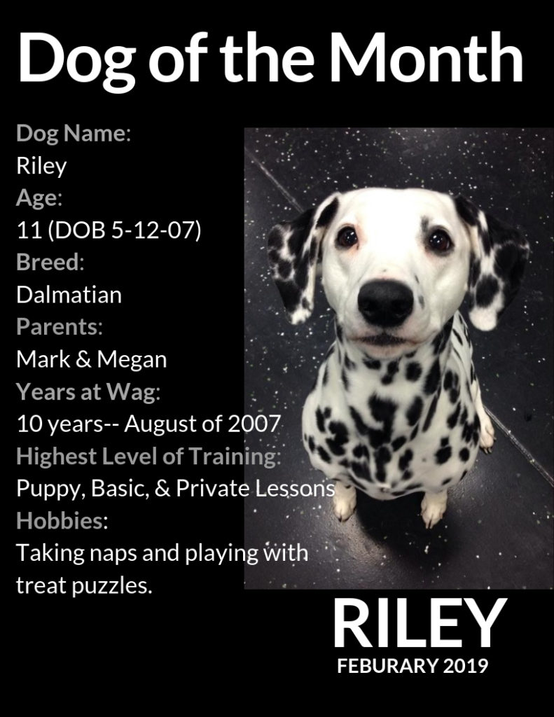 RILEY Dog of the Month Feb 2019