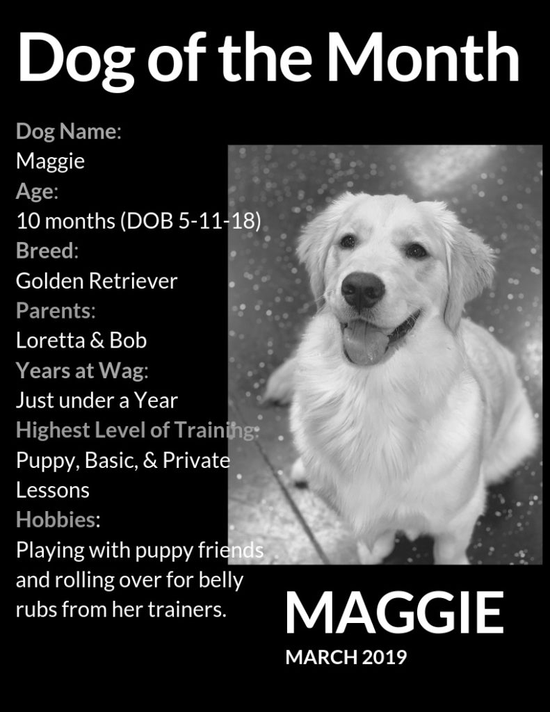 MAGGIE DOM MARCH 2019