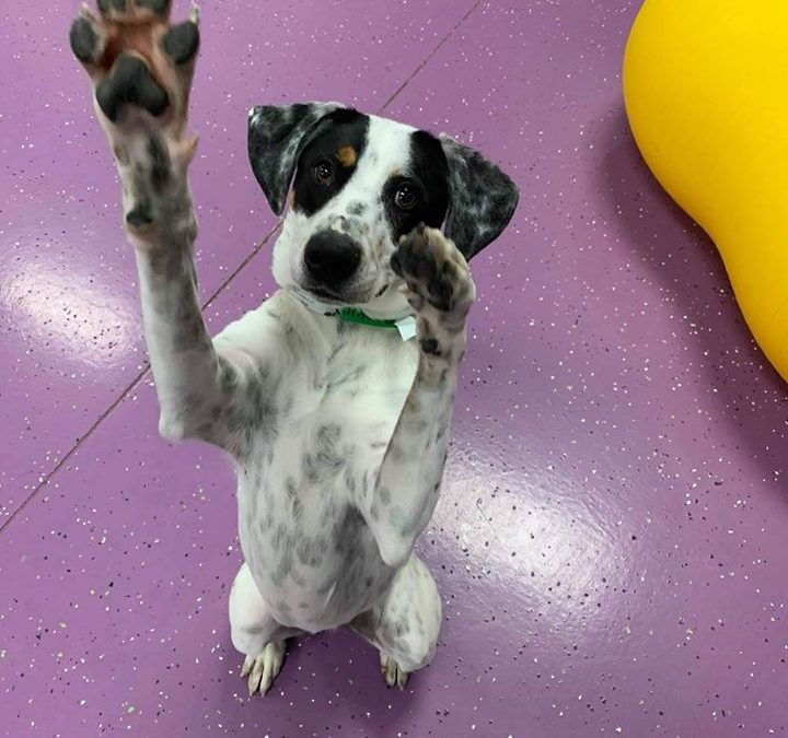 Dog Training Techniques for the Learner and the Teacher